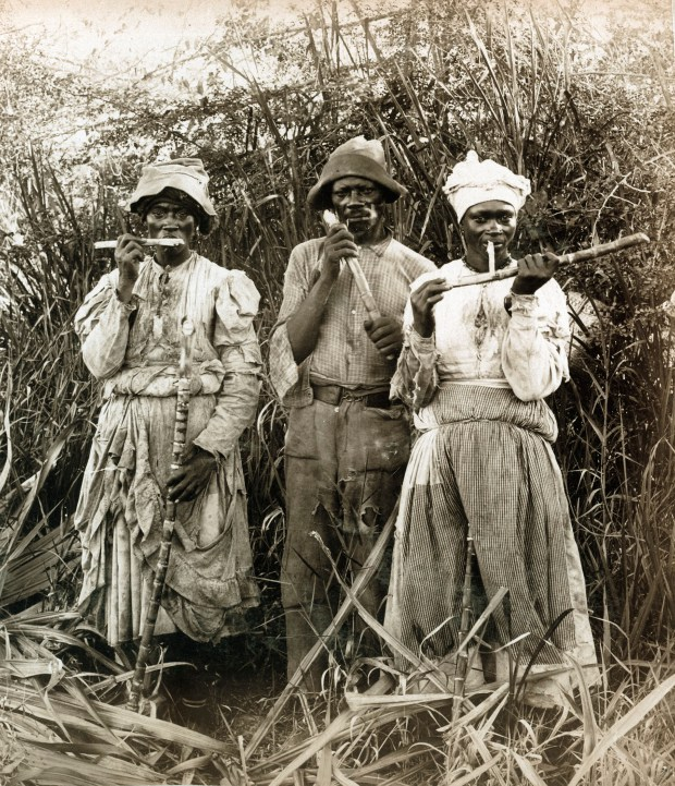 Sugar Cane Cutters in Jamaica, around 1890 (Picture: A. Duperly and Sons)